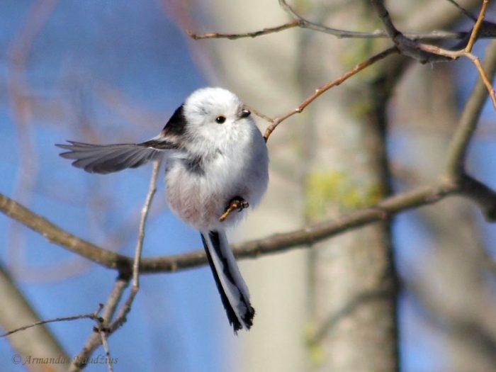 Перелетная ли птица ополовник фото