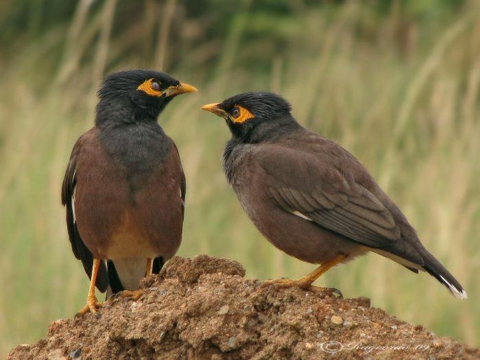 Разведение птиц фото