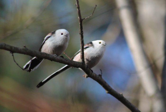 Самец и самка: основные отличия фото