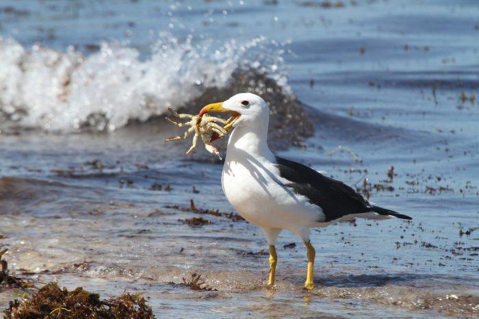 Особенности питания альбатроса фото