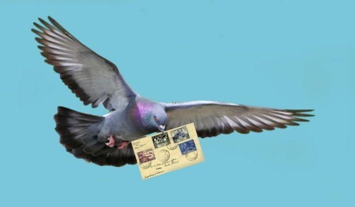 Почтовые голуби фото