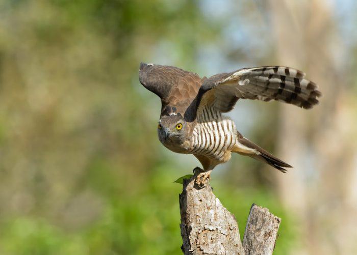Интересные факты о птице база фото