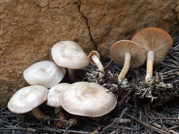 Интересные факты о грибе фото