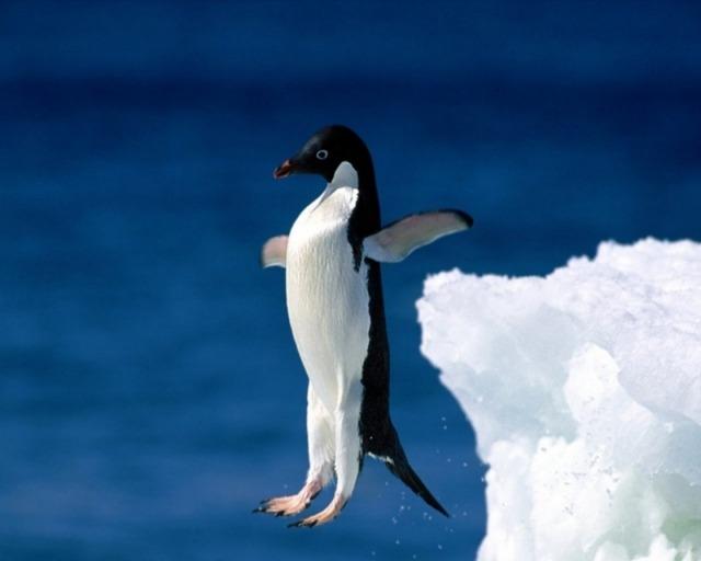 Интересные факты о пингвинах фото