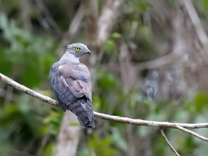 Описание птицы база фото