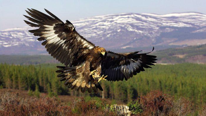 Описание орла фото