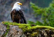Орел фото