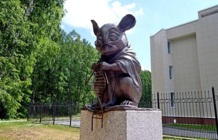 Интересные факты о домой мыши фото