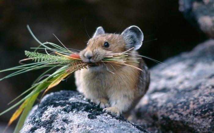 Полевка обыкновенная образ жизни животного