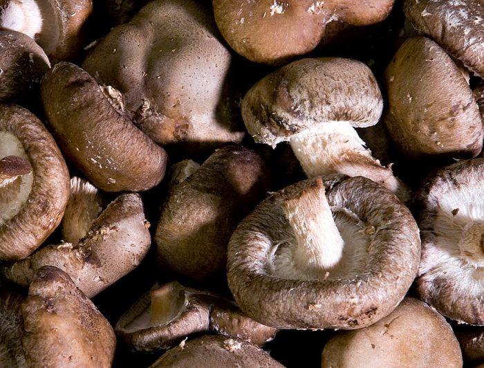 Выращивание гриба шиитаке в домашних условиях фото