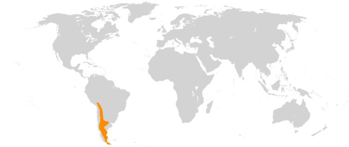 Распространение гуанако фото