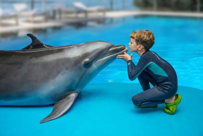 Интересные факты о дельфине, дельфинотерапия
