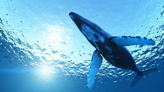 Интересные факты о синем ките