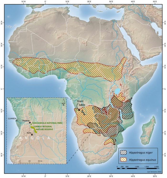 Распространение лошадиной антилопы