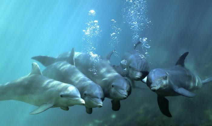 Описание дельфина