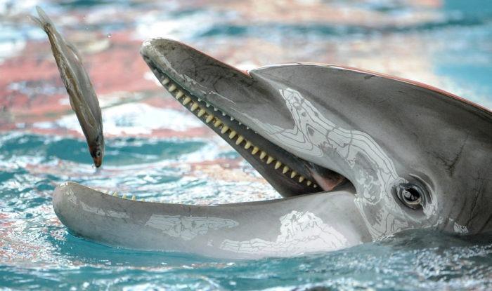 Особенности питания дельфина