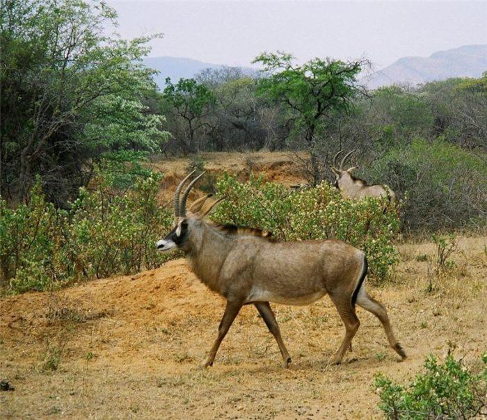 Особенности питания лошадиной антилопы