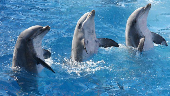 Поведение дельфина