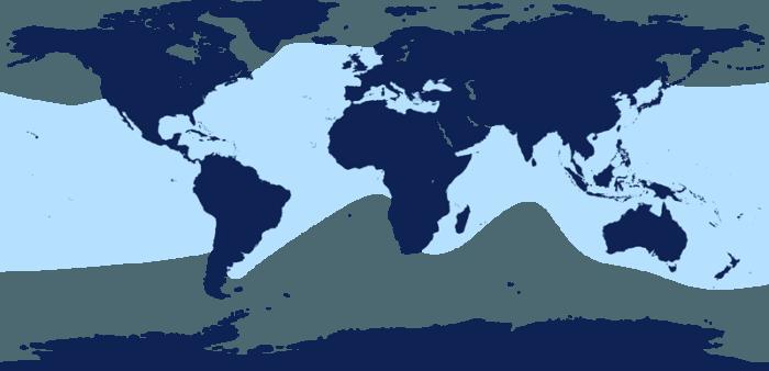 Распространение дельфина