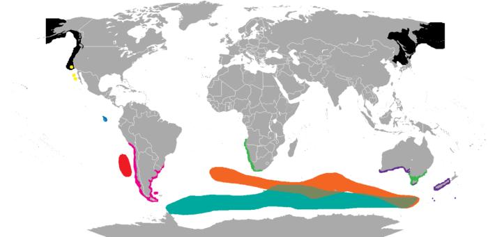 Распространение морских котиков