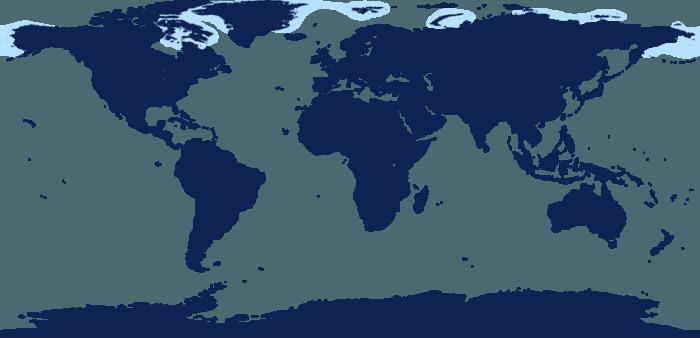 Распространение моржа