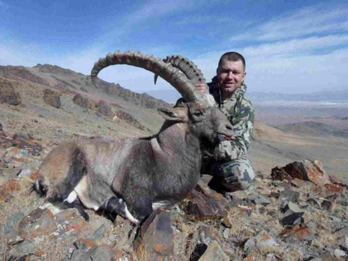Естественные враги альпийского горного козла