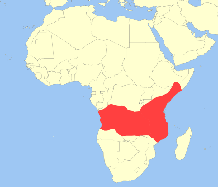 Распространение бабуина