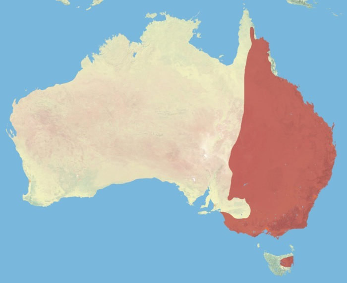 Распространение большого серого кенгуру