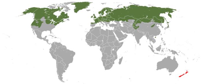 Распространение горностая