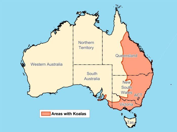 Распространение коалы