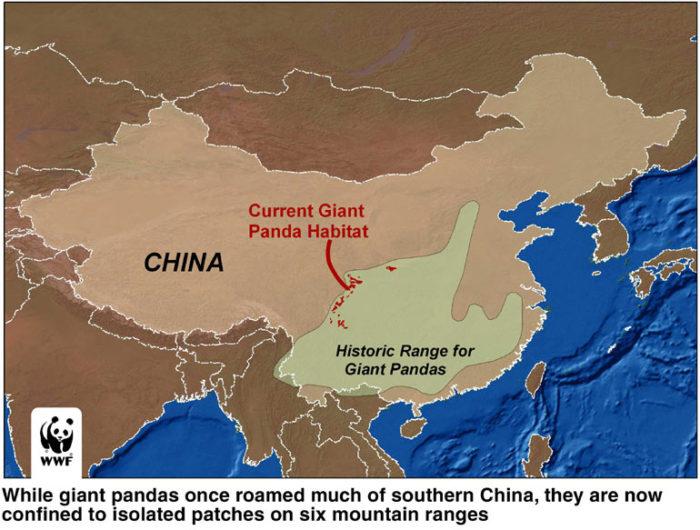 Распространение панды