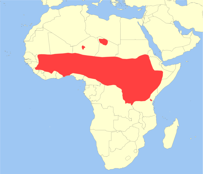 Распространение павиана анубиса