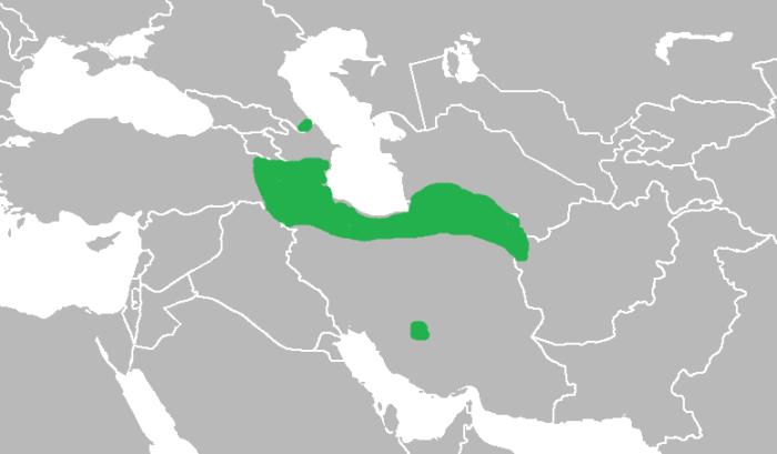 Распространение переднеазиатского леопарда