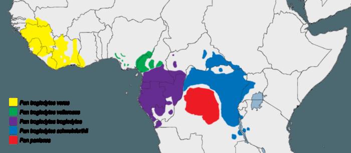 Распространение шимпанзе