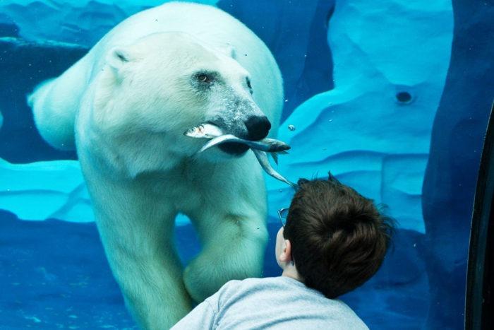 Особенности питания белого медведя