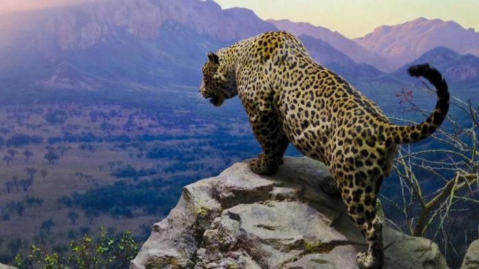 Где обитают ягуары