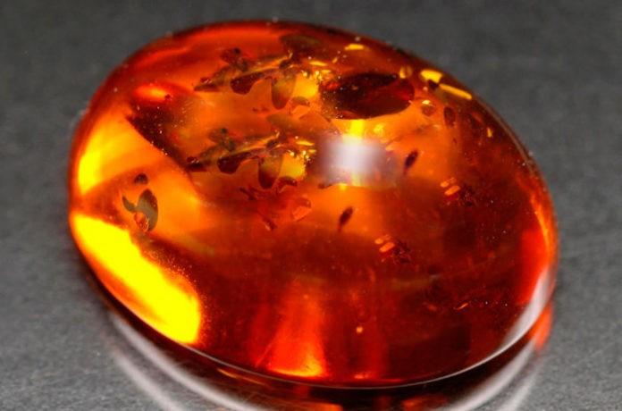 Янтарь – свойства, происхождение и виды янтаря в 2019 году