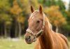 Лошадь Продолжительность жизни