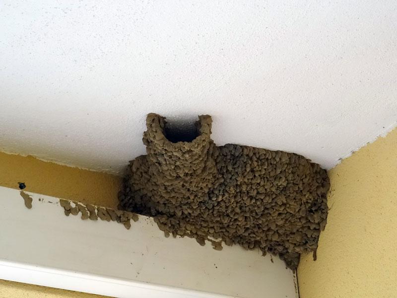 Гнездо ласточки на балконе.