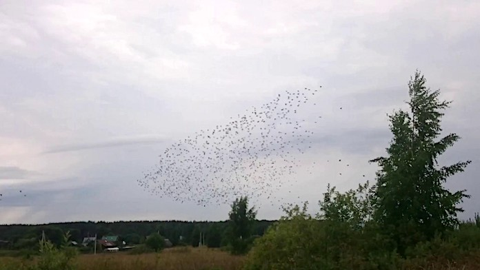 Ласточки летят на Юг - фото