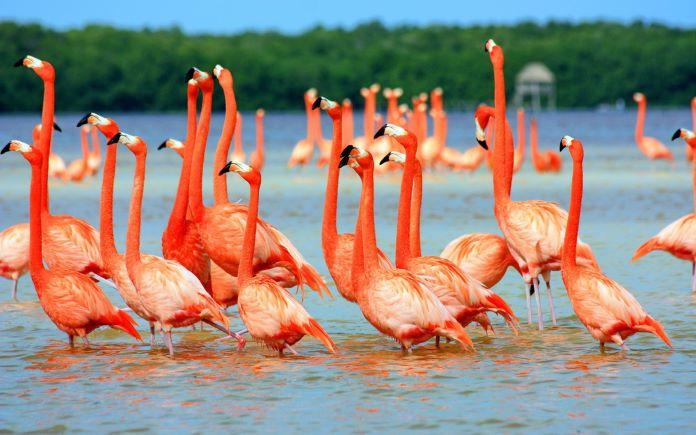 Где обитает птица фламинго