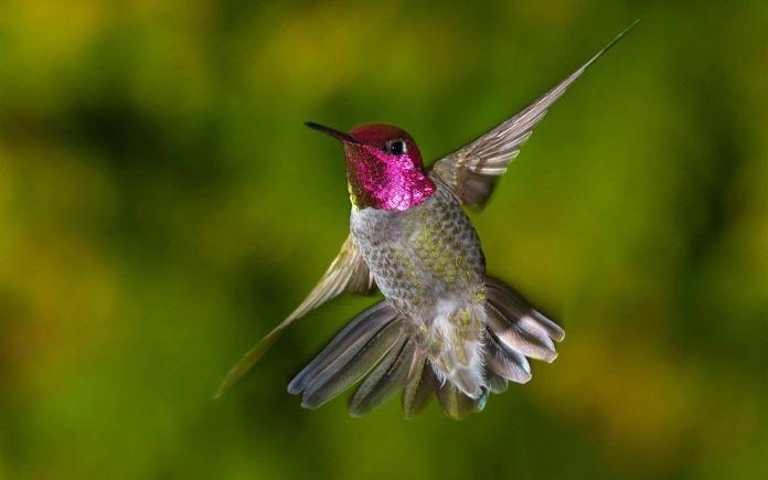 Где обитают колибри