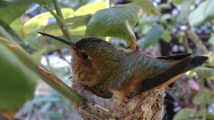 Где обитает птица колибри