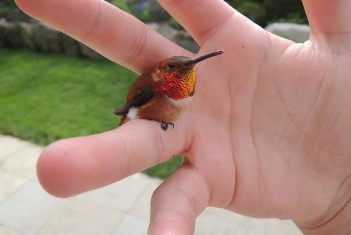 Размер колибри