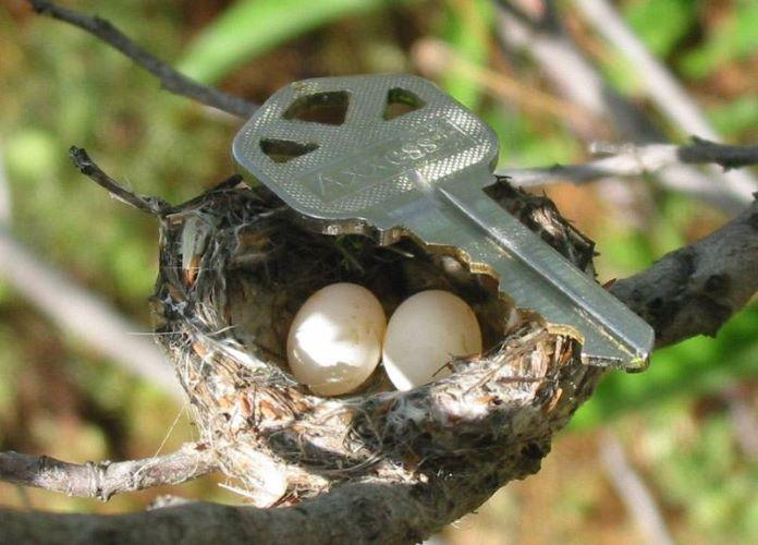 Размер яиц колибри