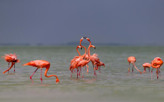 Образ жизни фламинго