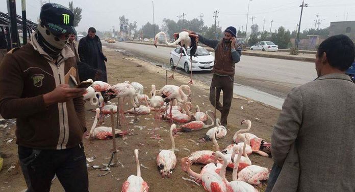 Сколько стоит фламинго