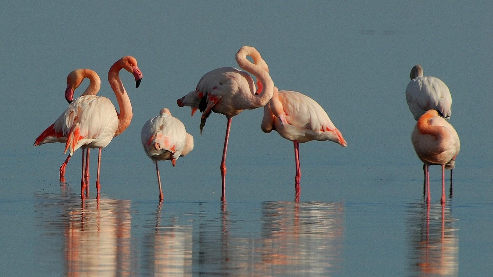 Почему фламинго на одной ноге