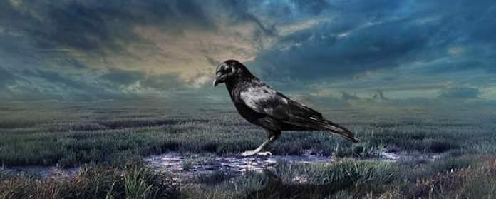 Ворона приметы