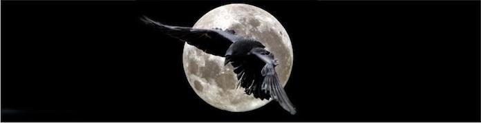 К чему снится ворона